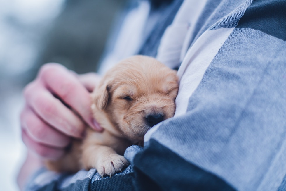 Puppy being held by a vet